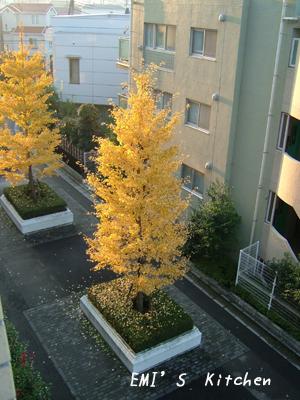 2008_11_17_emi1